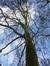 Platane à feuille d'érable – Schaerbeek, Avenue Huart Hamoir et Square Riga, Avenue Huart Hamoir –  10 Janvier 2013