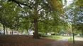 Platane à feuille d'érable – Schaerbeek, Avenue Huart Hamoir et Square Riga, Avenue Huart Hamoir –  24 Septembre 2015