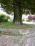 Hêtre pourpre – Woluwé-Saint-Lambert, Square Marie-José, Avenue Marie-José –  22 Mai 2013