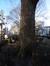 Platane à feuille d'érable – Woluwé-Saint-Lambert, Square Joséphine-Charlotte, Square Joséphine-Charlotte –  20 Janvier 2017