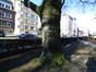 Hêtre d'Europe – Woluwé-Saint-Lambert, Square Joséphine-Charlotte, Square Joséphine-Charlotte –  20 Janvier 2017