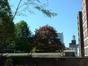 Tilia sp – Saint-Josse-Ten-Noode, Rue Royale, 213-211 –  07 Mai 2002