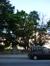 Robinier faux-acacia – Saint-Josse-Ten-Noode, Square Armand Steurs, Square Armand Steurs –  16 Août 2013