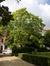 Catalpa rougeâtre – Saint-Josse-Ten-Noode, Square Armand Steurs, Square Armand Steurs –  14 Août 2013