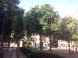 Marronnier commun – Bruxelles, Place du Grand Sablon –  30 Juin 2015