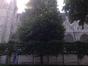 Tilleul du Caucase – Bruxelles, Place du Grand Sablon –  30 Juin 2015