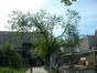 Mûrier blanc – Bruxelles, Rue de la Madeleine –  15 Mai 2002