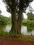 Peuplier d'Italie, Parc des Etangs