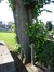 Tilleul à larges feuilles – Schaerbeek, Cimetière de Saint-Josse-ten-Noode, Rue Henri Chomé, 9 –  30 Mai 2002