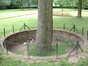 Rode beuk – Schaarbeek, Albertpark of Terdelt, Rector Van Waeyenberghdreef –  04 Juni 2002