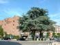 Cèdre bleu de l'Atlas – Evere, Place Jean De Paduwa –  17 Juin 2002