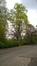 Tulipier de Virginie – Auderghem, Parc Tenreuken, Avenue du Grand Forestier –  13 Avril 2017