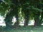 Charme commun – Evere, Avenue Henry Dunant –  17 Juin 2002