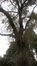 Witte abeel – Evere, Eenboomstraat –  20 Oktober 2016