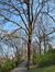 Zomereik – Oudergem, Tenreukenpark, Woudmeesterlaan –  14 April 2021
