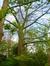 Hêtre pourpre – Woluwé-Saint-Lambert, Ancienne propriété Floralies, Avenue Paul Hymans –  13 Avril 2017