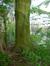 Rode beuk – St.- Lambrechts - Woluwe, Voormalige eigendom Floralies, Paul Hymanslaan –  13 April 2017