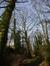 Chêne rouge d'Amérique – Watermael-Boitsfort, Parc du Couvent des Religieuses de l'Eucharistie, Avenue Léopold Wiener, 26 –  24 Février 2014