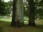 Beuk – Watermaal-Bosvoorde, Ottervangerstraat –  04 Juli 2002