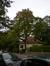 Erable plane – Watermael-Boitsfort, Avenue Léopold Wiener, 90 –  09 Octobre 2013