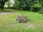 Sorbier de Thuringe – Watermael-Boitsfort, Cités-Jardin Le Logis et Floréal, Avenue des Dryades –  13 Juin 2014