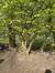Parrotie de Perse – Watermael-Boitsfort, Parc Seny, Boulevard du Souverain –  14 Avril 2021