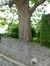 Catalpa commun – Watermael-Boitsfort, Cités-Jardin Le Logis et Floréal, Avenue des Archiducs, 117 –  13 Juin 2014