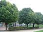 Sorbier blanc/Alouchier – Saint-Gilles, Place Louis Morichar –  05 Août 2002