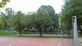 Sorbier blanc/Alouchier – Saint-Gilles, Place Louis Morichar –  05 Juillet 2016