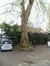 Platane à feuille d'érable – Saint-Gilles, Rue de Suisse, 35 –  17 Avril 2012