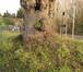 Tilleul à larges feuilles – Molenbeek-Saint-Jean, Rue Kasterlinden –  22 Janvier 2021