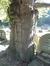 Cerisier du Japon – Woluwé-Saint-Lambert, Avenue du Dernier Repos –  01 Octobre 2015