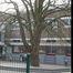 Marronnier commun – Woluwé-Saint-Lambert, Avenue Albert Dumont, 1 –  11 Février 2020