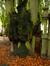 Hêtre pleureur – Bruxelles, Cimetière de Laeken, cimetière –  17 Octobre 2013