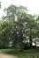 Erable sycomore – Anderlecht, Parc Forestier –  15 Mai 2017