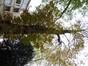 Marronnier commun – Ixelles, Parc Buchholtz, Rue Américaine –  08 Novembre 2012