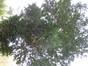 If commun – Ixelles, Parc Buchholtz, Rue Américaine –  11 Juin 2003