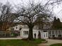 Cerisier du Japon – Ixelles, Rue du Viaduc, 133 –  18 Février 2014