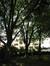 Erable sycomore – Ixelles, Parc Jadot, Rue du Bourgmestre –  23 Mai 2014