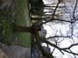 Witte moerbei – Elsene, Jadotpark, Burgemeestersstraat –  11 December 2012