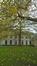 Platane à feuille d'érable – Bruxelles, Jardins de l'Abbaye de la Cambre –  14 Novembre 2017