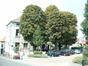 Marronnier commun – Berchem-Sainte-Agathe, Rue Jean-Baptiste Vandendriesch, 19 –  21 Août 2003