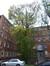 Erable argenté – Bruxelles, Site de l'Hôpital Brugmann , Avenue Ernest Masoin, 4 –  21 Octobre 2014