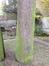 Cèdre bleu de l'Atlas – Ganshoren, Rue Georges Simpson, 44 –  09 Décembre 2013