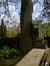 Erable plane – Evere, Cimetière de Bruxelles, cimetière –  08 Avril 2014
