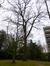 Chêne pédonculé – Uccle, Rue Joseph Bens, 43-45 –  18 Mars 2014