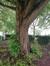 Ptérocaryer à feuilles de frêne – Jette, Parc de la Jeunesse, Avenue du Comté de Jette –  07 Juin 2018