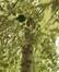 Ilex aquifolium 'Albomarginata' – Jette, Square Jules Lorge, Square Jules Lorge –  03 Septembre 2019