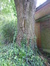 Acer platanoides f. crispum – Jette, Place de la Grotte et jardin public, Rue Léopold I –  26 Mai 2016