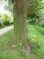 Tilleul argenté – Jette, Parc Huybrechts, Rue Rosalie Uyttenhove –  24 Mai 2016
